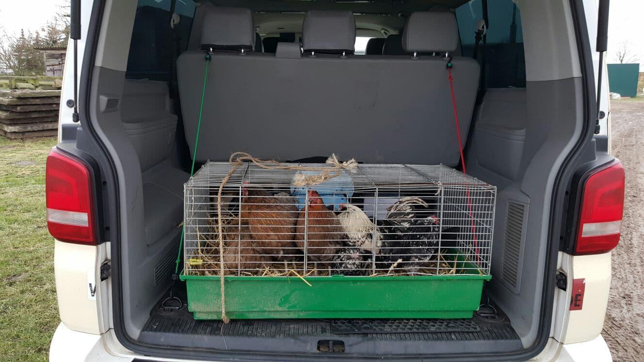 Taxi Rostock Transport von Kleintieren