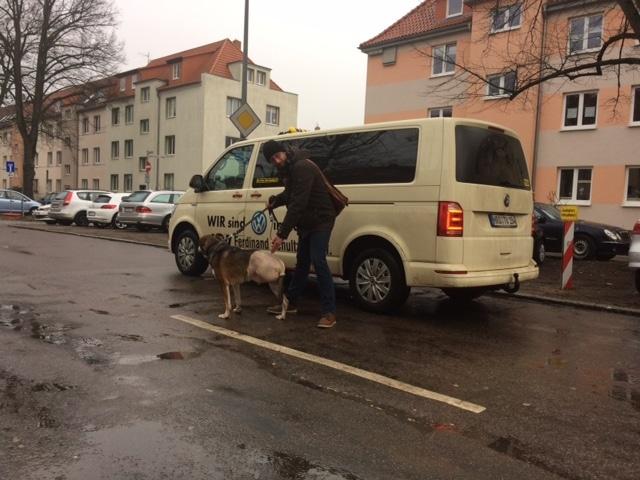 Taxi Rostock noch eine Fahrt zum Tierarzt
